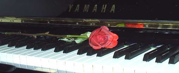 Red rose on a piano - The Key of Love
